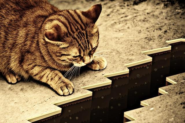 cat-1055602_640