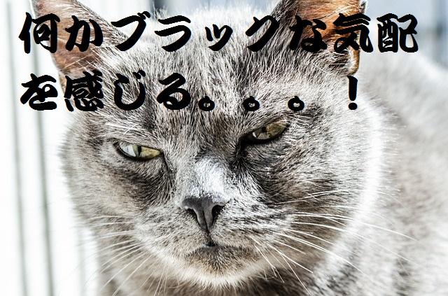 cat-334383_640