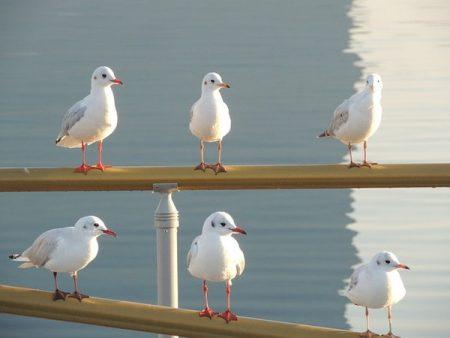 seagulls-781672_640-min