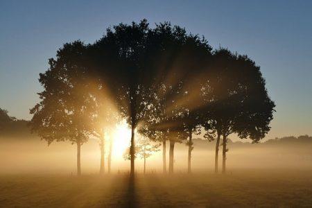 trees-1657824_640-min